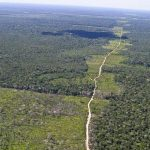 267177107-amazonia-floresta-amazonica-agencia-brasil.jpg